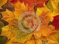 Autumn colored leaves with rain drops background