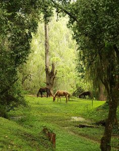 Pretty Horses, Horse Love, Beautiful Horses, Animals Beautiful, Beautiful World, Beautiful Places, Amazing Places, Zelt Camping, All About Horses