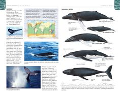 2 page spread on whales