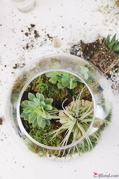 DIY Succulent Terrar