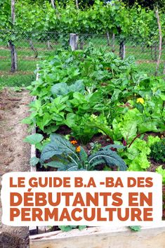 Permaculture Design, Potager Garden, Agriculture, Vegetable Garden, Planters, Vegetables, New York, Garden, Permaculture