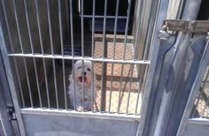 """""""Take me home!"""" I'm at the OC Shelter in Orange, CA."""