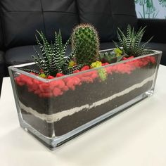 Fanscinating Colored terrarium setup in Large Rectangular Vase. This colored terrarium consist of 4 Succulent Bowls, Succulent Centerpieces, Succulent Care, Succulent Gardening, Succulent Arrangements, Succulents Garden, Mini Cactus Garden, Terrarium Plants, Succulent Terrarium
