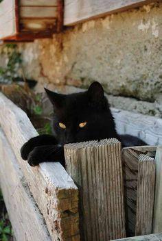 Sweet little black cat.
