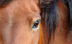Horse Meat Found in Burgers | Sign and share petition.  Thanks