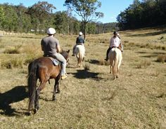 Horses have Personal Space too! Chapman Valley Horse Riding | Blog | Horse Riding - Basics & Beginner's Tips www.chapmanvalleyhorseriding.com