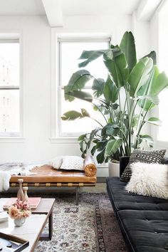 A bright living room with a large indoor plant and a leather day bed