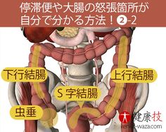 停滞便の箇所が自分で分かる方法2-2健康技 Lose Weight, Weight Loss, Human Body, Body Care, Anatomy, Mental Health, Medicine, Health Fitness, Healthy