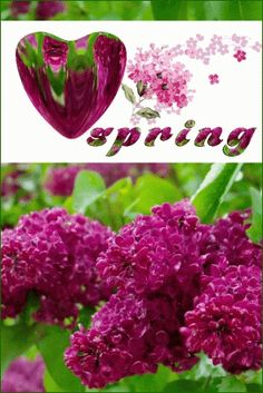 The perfect ILoveSpring Heart Spring Animated GIF for your conversation. Discover and Share the best GIFs on Tenor. Heart Gif, Gifs, Lilac, My Love, Spring, Garden, Hearts, Lilac Bushes, Garten