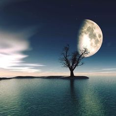 Via @gabriele_corno Gabriele Corno  Rising Moon by Alexandra Kleist #crossfit #crossfitgirls #crossfitgames #bodybuilding #bodybuildingmotivation #bodybuildinglifestyle #lift #weights #yoga #yogagram #yogapose #running #run #runner #instarun #instarunners #fit #fitness #fitstagram #fitfam #fitspiration #workout #wotd #wod #instafit #exercise #photooftheday #me #fashion #style #Landscapes #Landscapephotography #Nature #Travel #photography #pictureoftheday #photooftheday #photooftheweek…