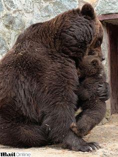 Hug of the bear