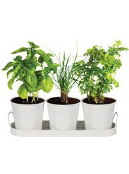 Herb Pots & Tray Set of 3 on www.1-day.co.nz
