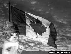 construXnunchuX: Cat War Picture Update