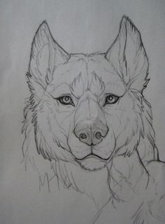 Ideas For Tattoo Wolf Realistic Beautiful Wolves Ideas For Tattoo Wolf Realistic Beautiful You can find Wolf drawing. Animal Sketches, Art Drawings Sketches, Cool Drawings, Pencil Drawings, Tattoo Sketches, Drawings Of Wolves, Realistic Animal Drawings, Arte Furry, Furry Art