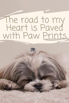Tell Us How Many Pets you have 😍💕💖🐱🐶🐦 Brain Training, Dog Training Tips, Free Training, Leash Training, Agility Training, Dog Agility, Cute Dogs Breeds, Dog Breeds, Ways To Relieve Stress