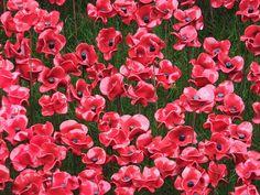 Tower of London Poppies - closeup - November 2014 Tower Of London, Seas, Close Up, Poppies, Blood, November, Plants, November Born, Poppy