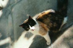 Cats in three colors: always female?  Gatti a tre colori, sempre femmine?