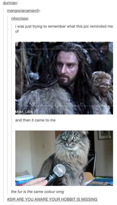 "Sir, are you aware you look like a cat? | 17 Jokes Only ""Lord Of The Rings"" Fans Will Get"