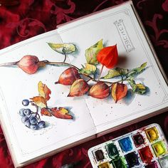 "8,362 Likes, 22 Comments - Watercolor illustrations (@watercolor.illustrations) on Instagram: "" Watercolorist: @elena_risovayka #waterblog #акварель #aquarelle #painting #drawing #art #artist…"""