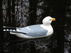 Sea Gull Confidence decoy.