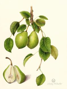 Beautiful botanical illustrations by Wendy Hollender