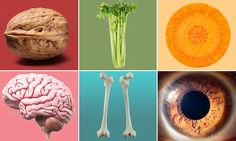 Healthista looks at the foods that are shaped like the organs they help most | Daily Mail Online