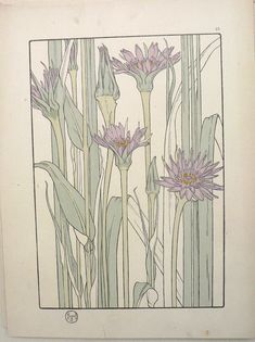 Jeannie Foord  -  Plate 15. Decorative Flower Studies. Paris: E. Greningaire, 1904. http://fineantiqueprints.com/Botanicalsearly20th/FoordJeannieArtNouveau