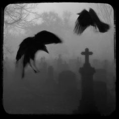 """Ghost Crows"""