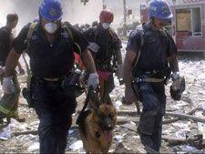 Cães heróis ajudaram durante os resgates do 11 de setembro - Foto 1 - Internacional - R7