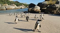 Boulders Beach, Cape Town. Been there, done that.