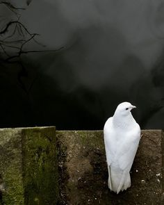 50 Incredible Examples of 'Best Shot' Wildlife Photography Wildlife Photography, Animal Photography, White Photography, Georg Trakl, Dove Pigeon, Hope Is The Thing With Feathers, Saint Esprit, White Doves, All Nature