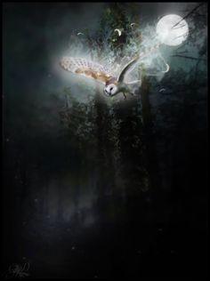 barn owl art