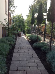 Mein Garten. My Garden