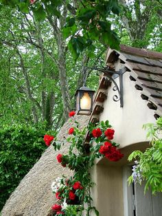Red Roses above a cottage doorway.