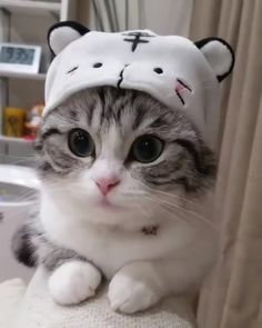 MAY 2020 video cat fighting- cat Meowing- Cats React to- cats Strongest- cats Cheese- cat Worlds- cat cute- cat fighting- cat talking- videofunny- Cats React. Cute Baby Cats, Cute Little Animals, Cute Cats And Kittens, Cool Cats, Kittens Cutest, Cute Dogs, Funny Cats, Funny Animals, Cute Cat Wallpaper