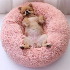 Our furry friends need their own special snuggle place to feel comfy, cozy and loved. Treat your most beloved companion to a little luxury with our Comfy Faux Fur Pet Bed. Made of durable nylon, this pet bed is soft and luxurious, as well as practical Animals And Pets, Baby Animals, Cute Animals, Pink Animals, Sleeping Dogs, Pet Beds, Little Dogs, Yorkshire Terrier, Dog Love