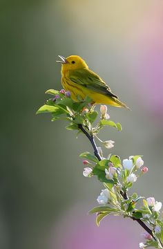"seasonalwonderment: """"Song of Spring' ~ Photogaphy by Robert Blair on 500px. """