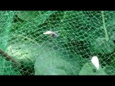 Wasp v Butterfly - YouTube