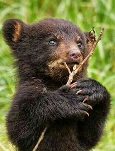 """""""Is that about anything I get to eat? How should I become a REAL BEAR with it? Large Animals, Cute Baby Animals, Animals And Pets, Funny Animals, Bear Cubs, Panda Bear, Grizzly Bears, Love Bear, Tier Fotos"""