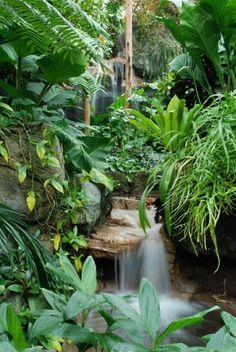beautiful rainforest garden with waterfall.