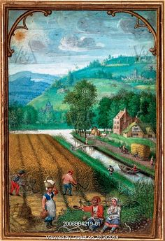 September, harvesting wheat, from a Book of Hours, by Simon Bening. Flanders, 16th century