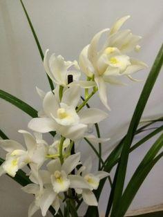 Pokojové rostliny | Květiny eshop - květiny Šrámek Plants, Plant, Planets