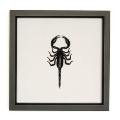 Real Scorpion Insect Art Display. $46.00, via Etsy.