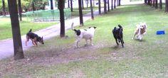 02/09/2015 - Torino con Zagor, Peja e Gaia