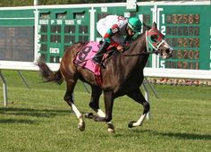Paco Lopez guides Ju Ju Eyeballs to her fourth straight victory in the Crank It Up Ju Ju, Horse Racing, Victorious, Horses, Animals, Animales, Animaux, Horse, Words