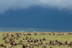Serengeti Under Canvas, Serengeti National Park, Tanzania. African safari travel at its best. Kilimanjaro Climb, The Great Migration, Serengeti National Park, Tanzania Safari, Morning View, African Safari, Places To Travel, National Parks, Wildlife