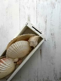Natural Scalloped Sea Shells. Nautical Coastal. Serving Dishes. Home and Living Decor.  Collection