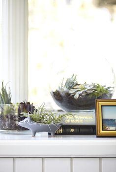 Hedgehog Planter + Terrariums from west elm #hogwild
