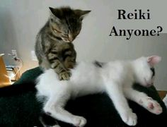 #Reiki Anyone? You know who you are, #cat lovers. (Pets love and are attracted to Reiki)