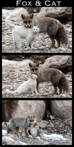 <b>2012: The year when species, great and small, finally decided that love